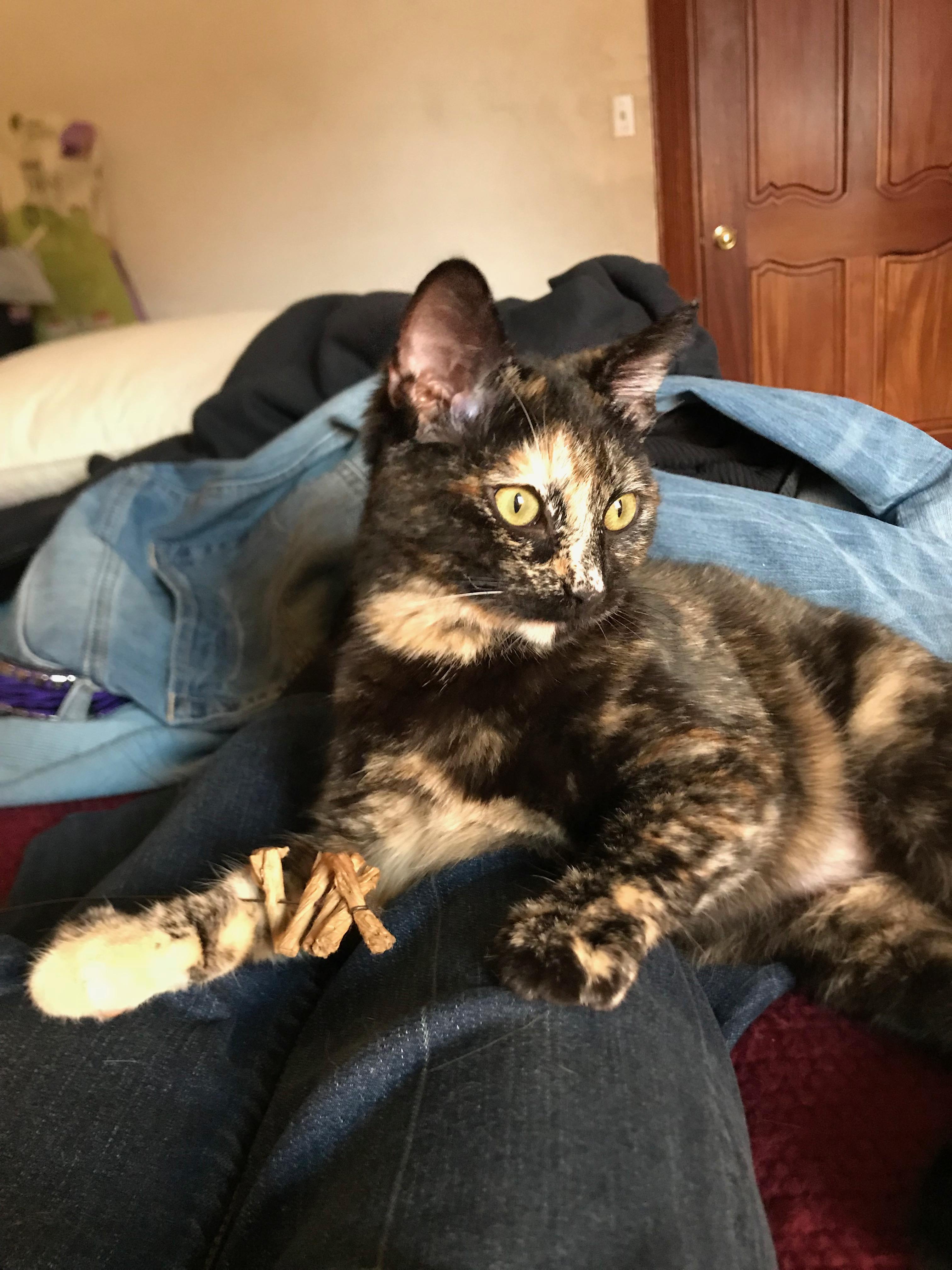Foster kitten Eleanor