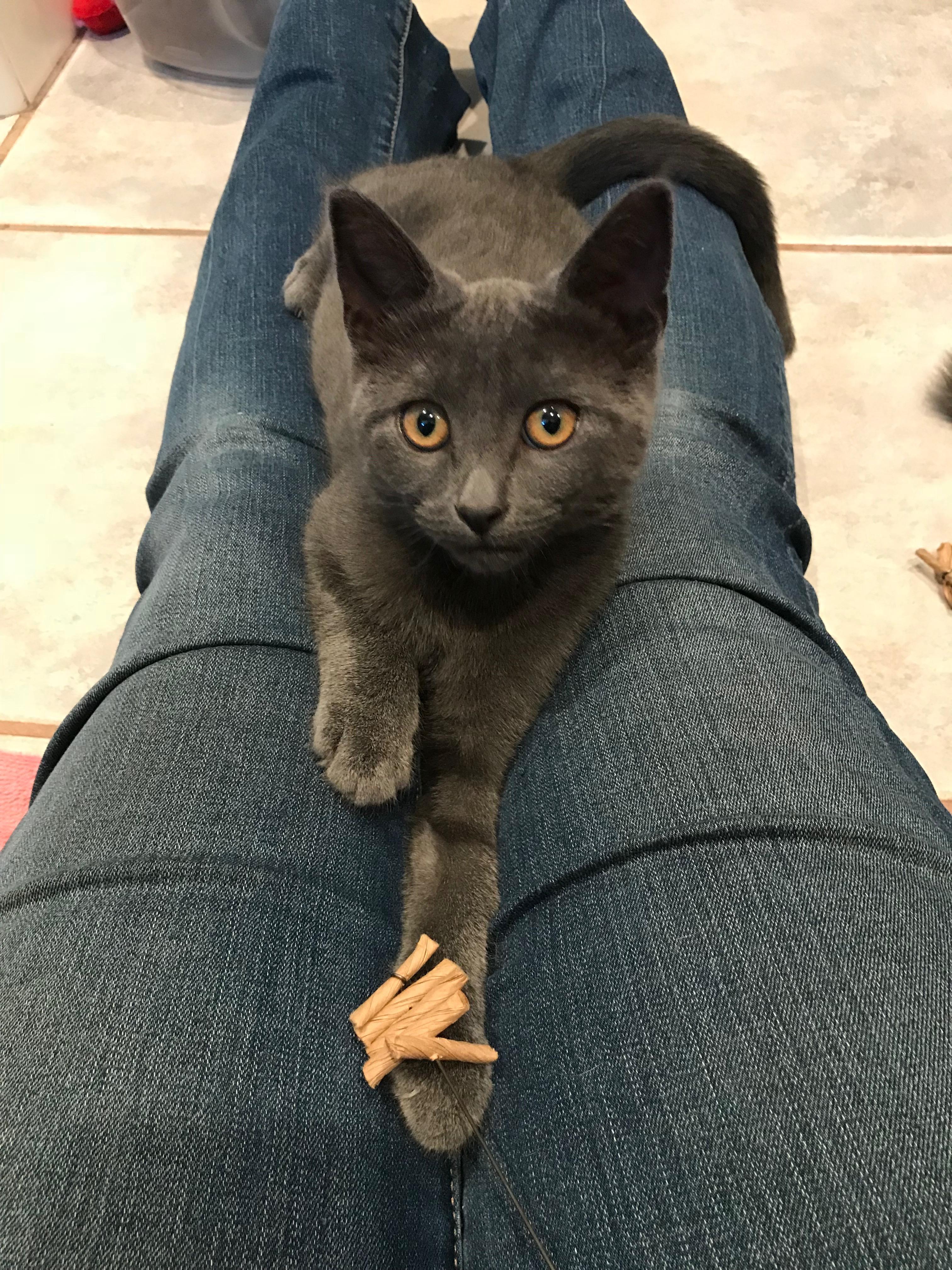 Foster kitten Perdita